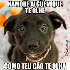 Fica Cãomigo: Conselho para o dia de hoje. Cut Animals, Animals And Pets, Funny Dog Pictures, Animal Pictures, Love Pet, I Love Dogs, Cute Funny Animals, Funny Dogs, Pet Dogs