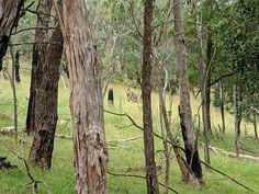 Trunks, Australia, Plants, Drift Wood, Tree Trunks, Plant, Planets