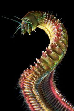 Sandworm by Alexander Semenov- Ok, this is scary!