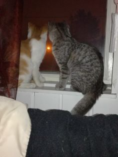 My lovely cats watching night lights
