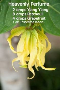 Heavenly Perfume  2 drops Ylang Ylang 8 drops Patchouli 4 drops Grapefruit 1 oz unscented lotion  This sounded so yummy I had to try it. I received so many compliments on it when I want out. A great way to introduce Young Living oils to the people you meet!