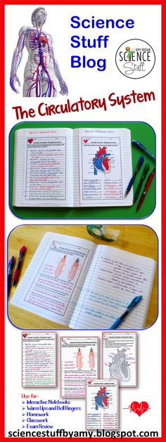 Blog post from Science Stuff: Circulatory System Interactive Notebook Pages / Warm Ups / Bell Ringers
