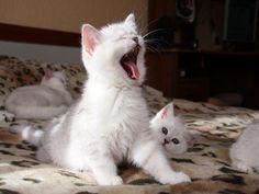 MOM-MY! I'm up!