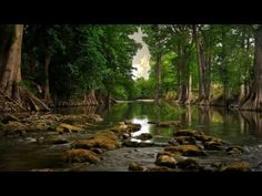 Beautiful river in the forest wallpaper - 2096 Forest Wallpaper, Tree Wallpaper, Nature Wallpaper, Wallpaper Backgrounds, Wallpaper Desktop, Wallpaper Gratis, Desktop Wallpapers, Mobile Wallpaper, 1366x768 Wallpaper