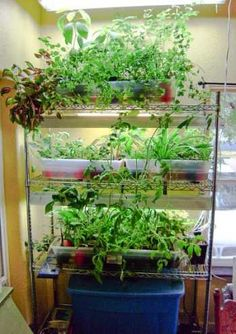 Do It Yourself Hydroponics