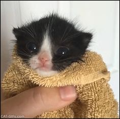 KITTEN GIF • Cute tiny Kitty wrapped in his bath towel. She is not happy, she need her Mom