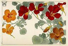 Resultado de imagen para redoute flower album
