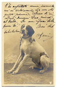 Brague st germain postcard