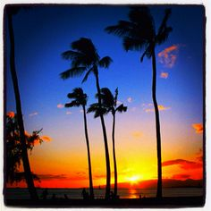 Beach and Palm Tree sunset