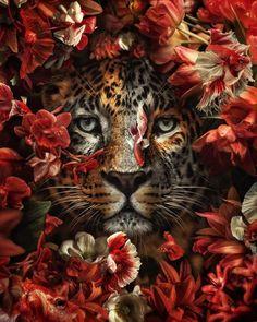 New art work. por Marcel van Luit Van Luit – Foto 311918005 / Marcel van L… – animal wallpaper Most Beautiful Animals, Beautiful Cats, Beautiful Creatures, Image Avion, Whats Wallpaper, Animals And Pets, Cute Animals, Afrique Art, Animal Posters