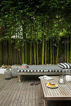 planter des bambous, un patio paisible, bambou vert planté: