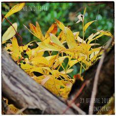In diretta dal giardino: piante di ottobre, Peonia Lactiflora 'Sarah Bernhardt' Leggi di più nel blog! #giardino #giardinoindiretta #ottobre #peonie #coltivazione