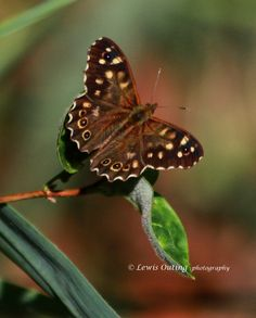 Butterfly Askham Bog by Lewis Outing on 500px