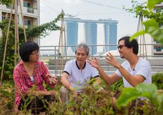 #SINGAPORE #SWD #GREEN2STAY  Resource-scarce Singapore is turning vacant pockets of land into space for urban farming as the island city strives to ease its reliance on imported food.  The wealthy Southeast Asian city-state imports more than 90 per cent of its food, much of it from neighbouring countries, which can leave it exposed to potential supply chain disruptions.