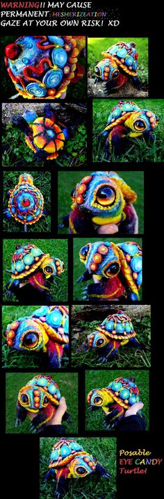 eye candy turtle