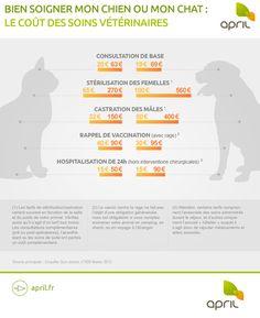 Infographie : Bien soigner mon chien ou mon chat | APRIL - Espace particuliers