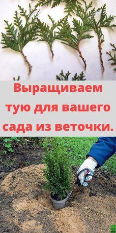Herbs, Soda, Plants, Lawn And Garden, Beverage, Soft Drink, Herb, Sodas, Plant