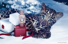Turning Photo-sharing into Brand-building -- (Power of Visual Social Media via Digital Age of Marketing) Cartier Panther Ring, Cartier Tank Anglaise, Blogging, New Darlings, Cartier Jewelry, Jewellery, Assouline, Winter's Tale, Brand Building