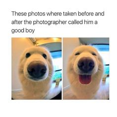 I love dogs #welovegoldens