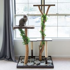 Looking for some DIY projects for your pet? If you want some cool DIY projects for your pet, here's a list that will provide you what you're looking for. Tree Branch Decor, Tree Branches, Tree Stumps, Cat Tree Plans, Diy Cat Tree, Cat Trees, Scratching Post, Cat Furniture, Rustic Furniture