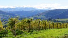 Albariño de Castillo Pedroso Spanish Wine, Bella, Wines, Costa, Indie, Mountains, Nature, Travel, Ribs