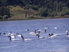 lo que vi en el lago budi