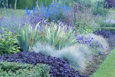 Planting combinations fit for a queen RHS Partner Gardens articles RHS Gardening Purple Garden, Colorful Garden, Back Gardens, Outdoor Gardens, Blue Fescue, Mediterranean Garden, Garden Borders, Plantation, Landscaping Plants