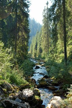 Mountain Creek by nickandrosemary on Flickr.    Bihor - Bihar Mountians, Transylvania, Romania