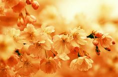 ÎNGRIJORAREA excesivă este o BOALĂ a sufletului – Sfântul Teofan Zăvorâtul Rose, Flowers, Plants, Pink, Plant, Roses, Royal Icing Flowers, Flower, Florals