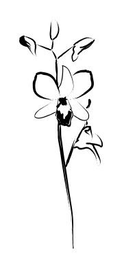 Single Orchid Blossom Line Art Time Tattoos, Tattoo You, Small Tattoos, Tatoos, Cool Tattoos, Orchid Drawing, Orchid Tattoo, Gorgeous Tattoos, Sister Tattoos