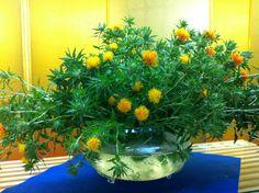 【御奉納】平成24年7月15日、若葉町の菊地郁子様より文月月次祭のときに飾ってくださいと紅花をいただきました。誠にありがとうございます。