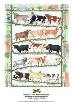 Kuhrassen Cow House, Rind, Nature Animals, Poster, Google Search, Cow, Switzerland, Home, Farmers