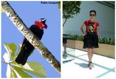 Bicho do Dia - Anambé-una #look #ootd #fashion #moda #santalolla