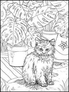 Blank Coloring Pages, Dog Coloring Page, Free Adult Coloring Pages, Fairy Coloring, Free Printable Coloring Pages, Coloring Sheets, Coloring Books, Cat Colors, Colorful Pictures