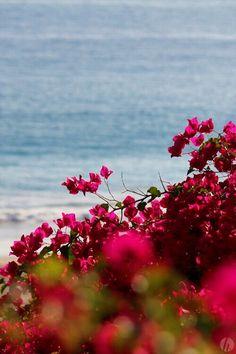 Peaking through flowers, ocean view