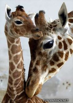 Baby Animals 4/Baby Animals 4 - 02.jpg