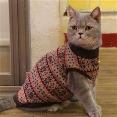 Shop our adorable Catspia Cat Clothing Collection at Organic Pet Boutique! Nebelung, Cat Clothing, Knitted Cat, Pet Boutique, Cat Sweaters, Kittens, Cats, Crochet Ideas, Brown