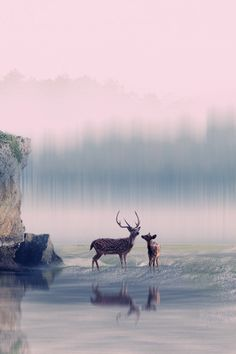 2 deer ~ By 3 Joko