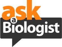 http://www.askabiologist.org.uk/ Here at Ask A Biologist, we have some of the world's foremost experts in every field of biology. From palaeontology to neuroscience, from marine life to mammoths, they're all here. Meet the experts who answer the questions: