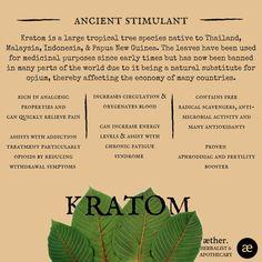 Kratom Benefits Medicinal Herbs, Medical Advice, Herbal Medicine, Apothecary, Natural Health, Drugs, Benefit, Detox, Herbalism