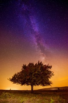 The Magic Tree by Igas Marius on 500px