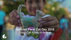 National Feral Cat Day 2016: Alley Cat Allies in Action   -    BRAVO!!!!!!!!!!  GOD BLESS YOU ALL!!!!!!!!