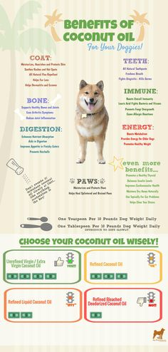 Do You Know that Coconut Oil is a Superfood for Dogs? – Infographic – Candle Making All Natural Toothpaste, Coconut Oil Toothpaste, Coconut Oil For Teeth, Coconut Oil For Dogs, Coconut Oil Pulling, Coconut Oil Uses, Benefits Of Coconut Oil, Organic Coconut Oil, Oil Benefits