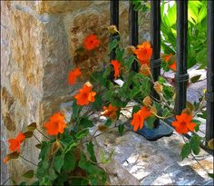 stone walls draped with flowers
