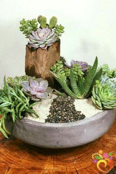 Want to send that extra something special, and have it last a lot longer than any typical flower arrangement? We love succulents, and so will whomever you are sending to when they see one of our custo Succulent Landscaping, Succulent Gardening, Garden Terrarium, Succulent Terrarium, Container Gardening, Garden Plants, Indoor Plants, Organic Gardening, Mini Cactus Garden