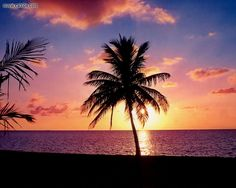 Perfect tropical sunset and palm tree http://www.rentalplaces.com/tropical