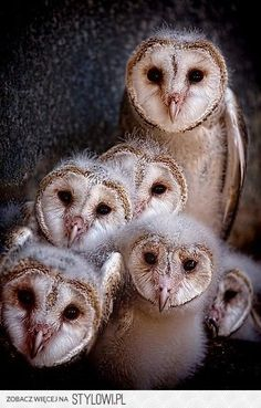 Parliament of owls  Attn:   Elizabella Lemoncella :)                                                                                                                                                                                 More