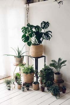 Plants Plants Plants. The Monstera looks so beautiful in the woven Kenyan basket.