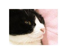 ぐら🐈 9歳 .  年に1度の恒例? ぐらちゃん、家出.°(ಗдಗ。)°. sisが実家に帰ってくると 私は災難だらけ。。 いつも慎重に玄関開けて って言ってるのに!! 無事を祈ることしかできない😢⚡️💔 ぐらは私にとっての 精神安定剤なのに、、、 #gura #cat #cats #catstagram #catsofinstagram #catsofinstagram #catslovers #instgood #girl #tuxedocat #9 #love #happy #cute #tbt #猫 #愛猫 #ねこ部 #タキシードキャット #ぐらいずむ #ねこばか #はちわれ #🐈 #🐱 #❤️#고양이 #좋아