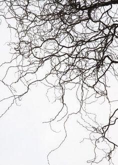 Pattern Abstract Visit our website for more details on 'metal tree artwork'. Texture Photography, Abstract Photography, Winter Photography, Levitation Photography, Experimental Photography, Exposure Photography, Beach Photography, Wedding Photography, Tree Artwork
